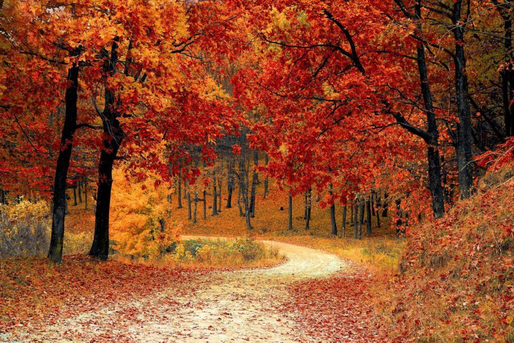 運勢の流れを変える10月の吉方位旅行