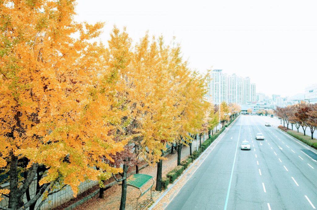 素朴な疑問を一気に解消 街路樹が植えられている理由【営業ネタに使える】
